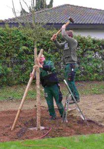 Pflanzarbeiten Baumschule Kaul